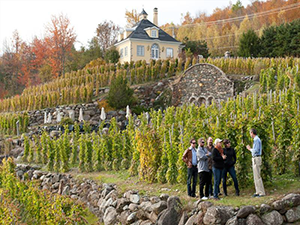 Wine Tour and Lunch in the Eastern Townships of Quebec